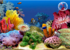 Webquest: Ocean aquarium | Recurso educativo 34601