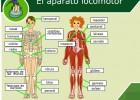 Funciones principales del sistema nervioso y sus partes