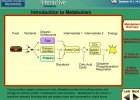 Video: Introduction to Metabolism | Recurso educativo 39923