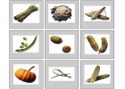 Vegetables flashcards | Recurso educativo 41945