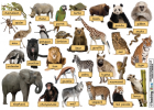 Zoo animals | Recurso educativo 42523