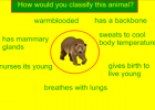 Animal characteristics | Recurso educativo 46367
