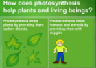 Photosynthesis | Recurso educativo 62562